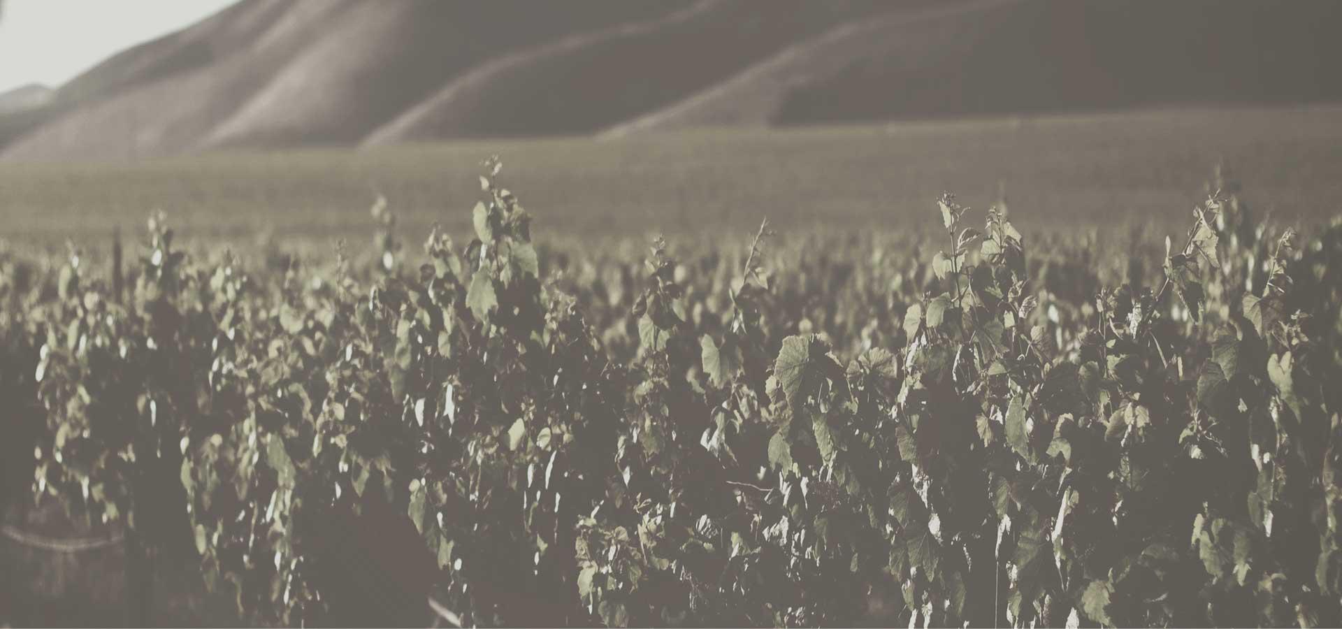Importers Worldwide - De Krans Wines